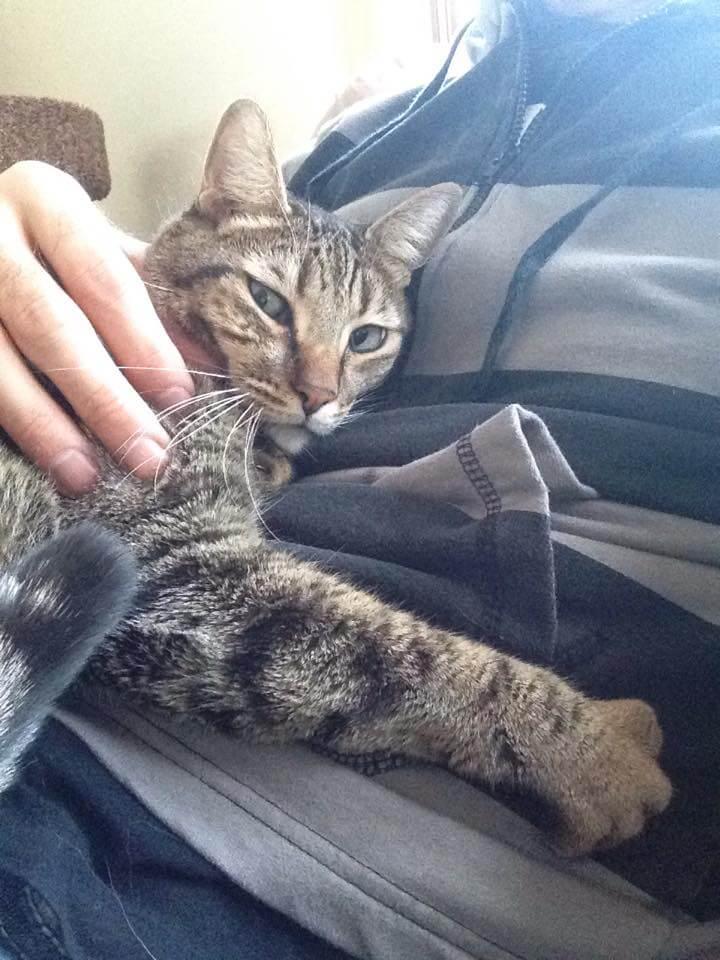 katt-cory.jpg